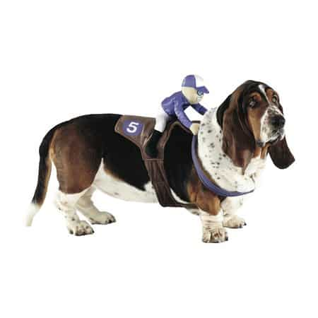 What is Your Pet Going to be for Halloween? - Pellerini