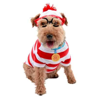 What is Your Pet Going to be for Halloween?