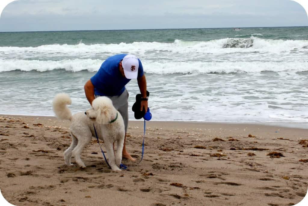 dogbeach1