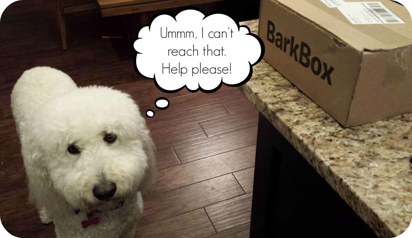 Sadie's February Barkbox