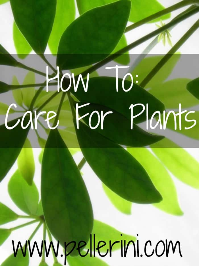 HOW TO: Care for Plants!