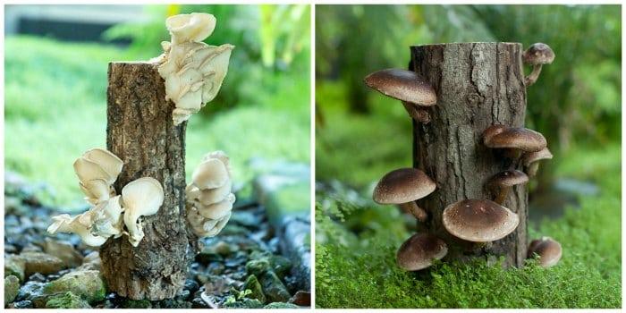 mushrooms on a log terrain