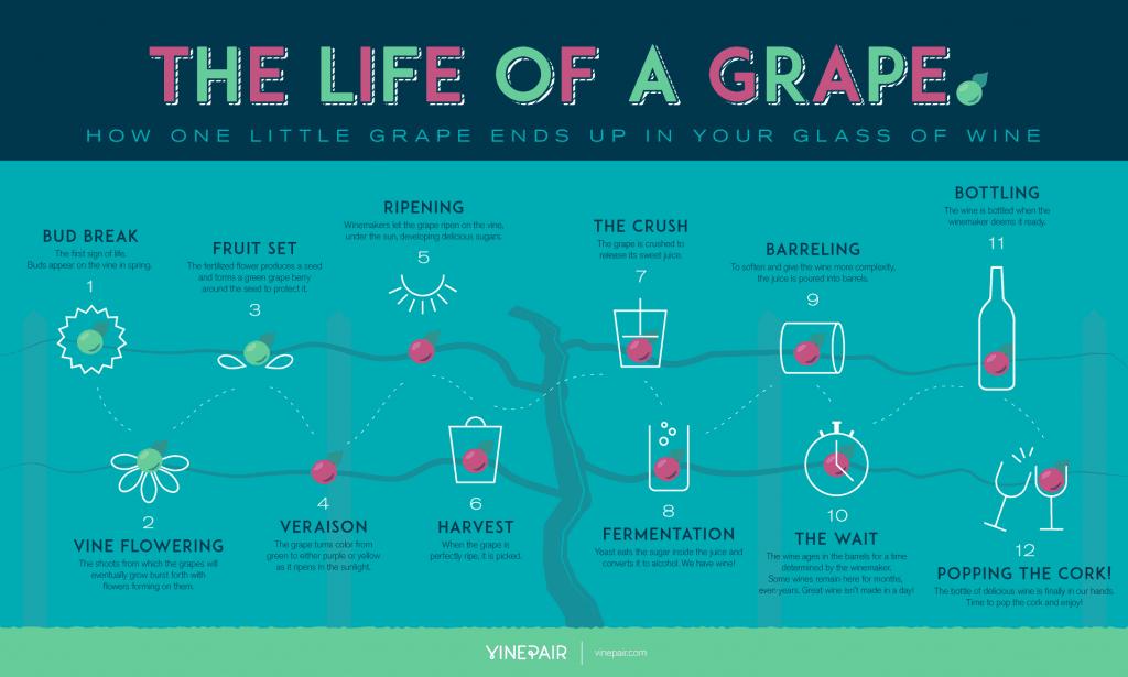 the life of a grape vinepair