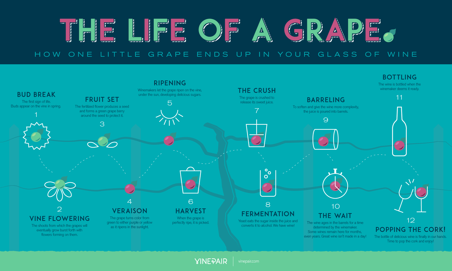 Wine-ing Wednesday – The Life of a Grape