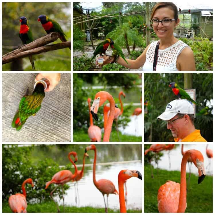 Lorys and Flamingos at Lion Country Safari