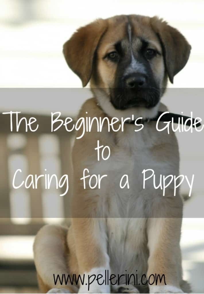The Beginner's Guide to Caring for a Puppy