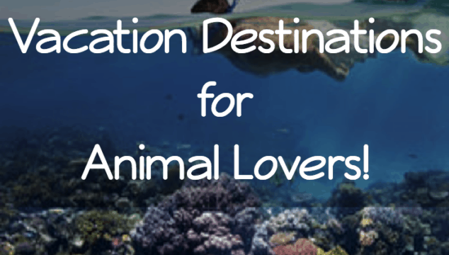 5 Amazing Vacation Destinations for Animal Lovers!