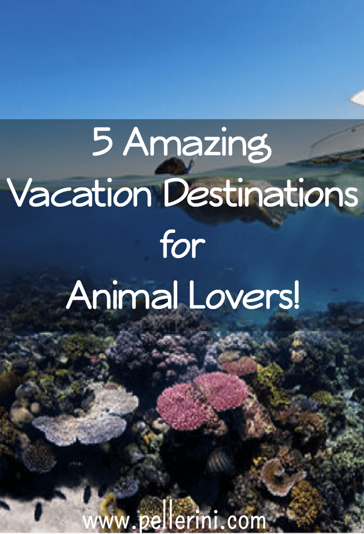 Amazing Vacation Destinations for Animal Lovers