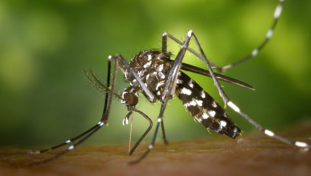 How To Keep Uninvited Guests – Mosquitos – From Crashing Your Next Party!