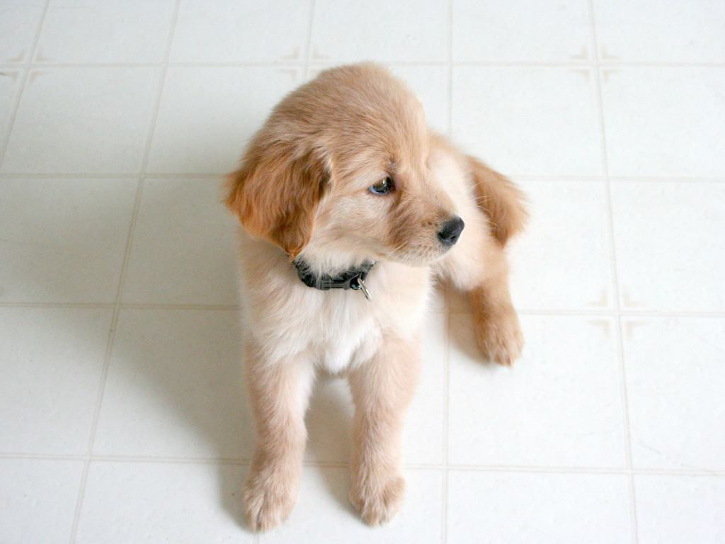 What to Expect When Expecting…A Puppy