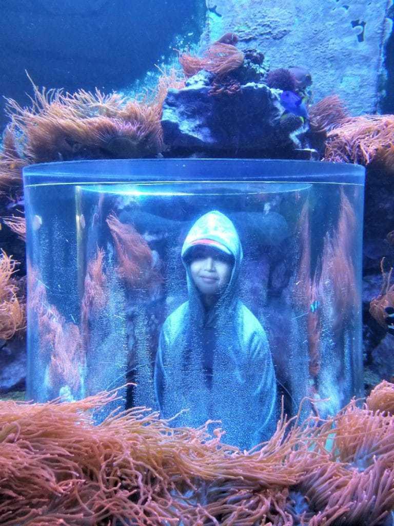 SeaWorld Orlando Travel Tips