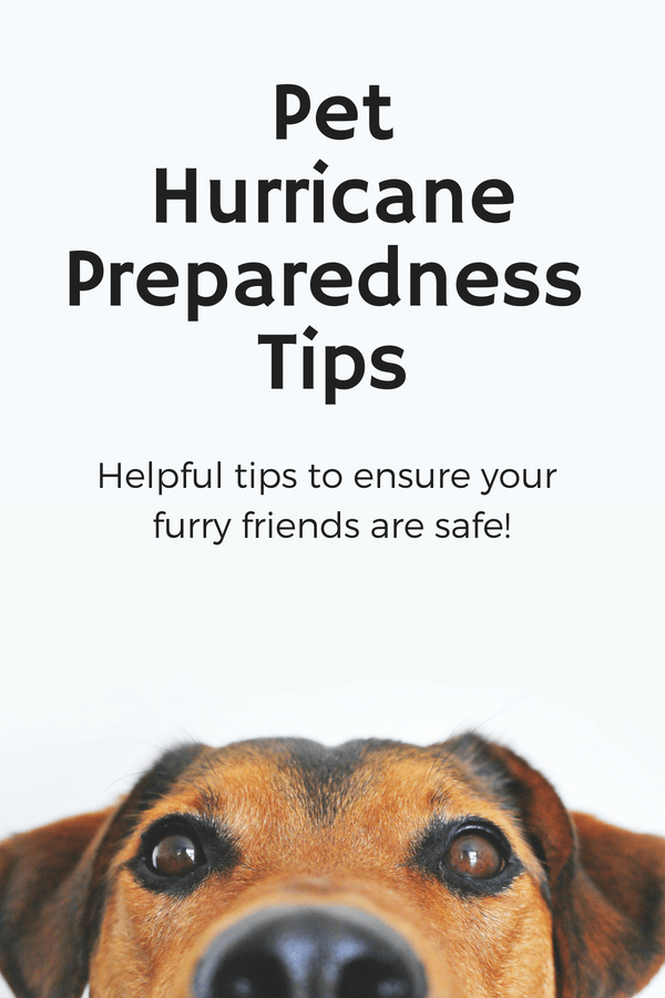 pet hurricane preparedness tips