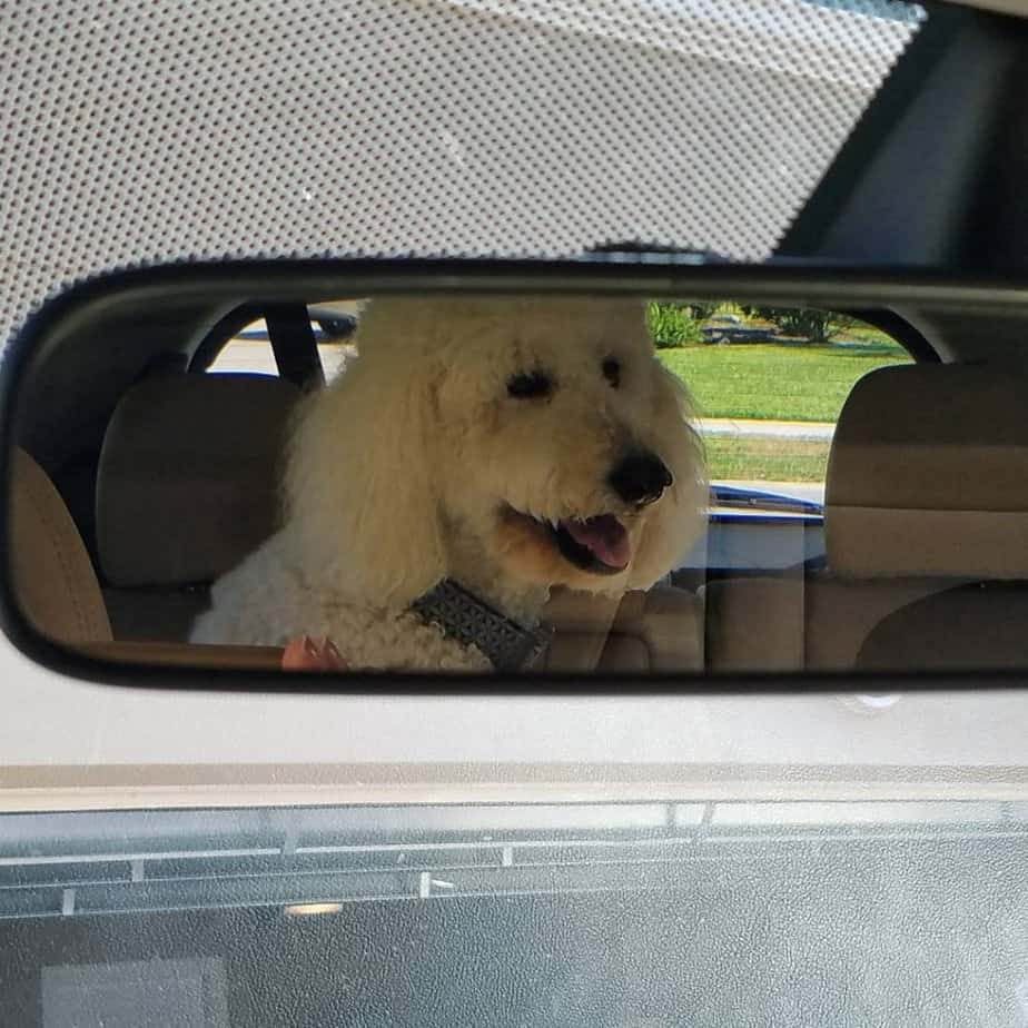 Sadie in the rear view mirror