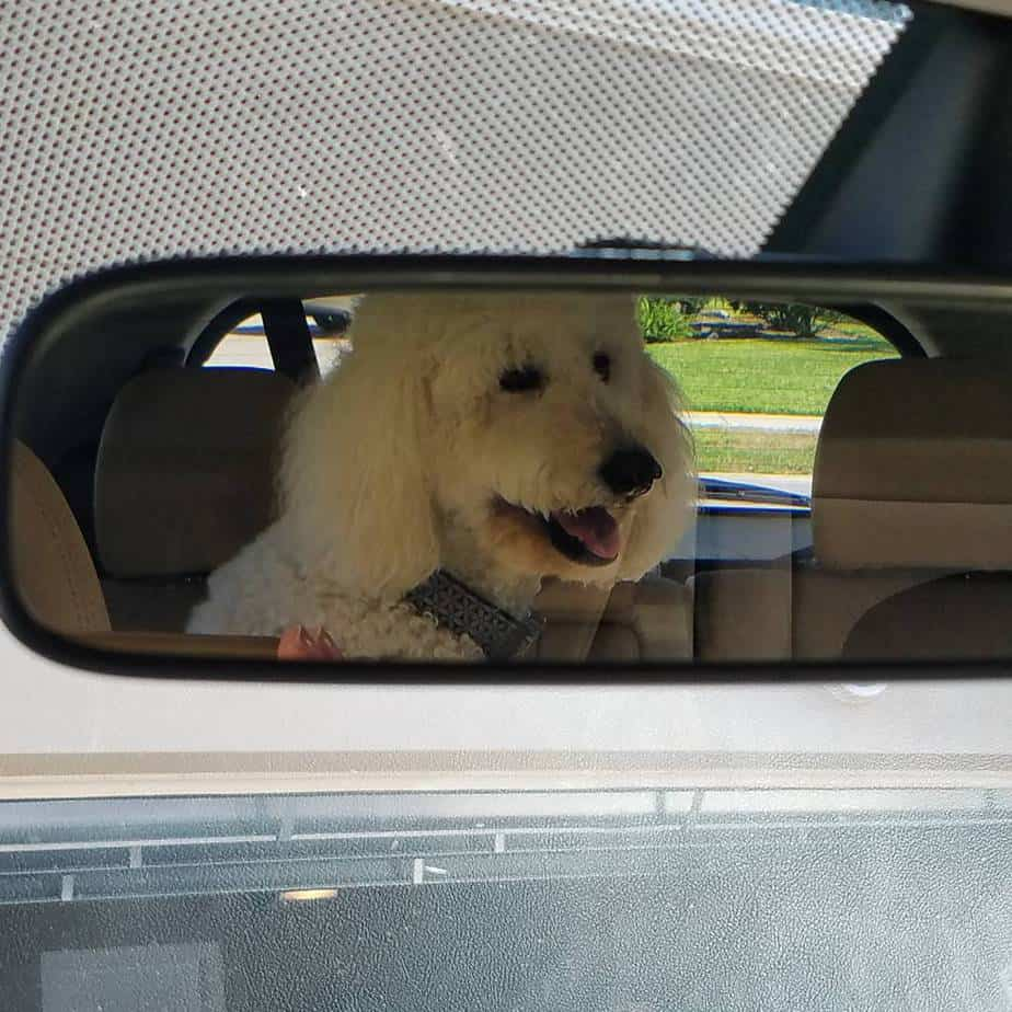 Traveling With Your Pet: Tips for a Safe and Fun Trip