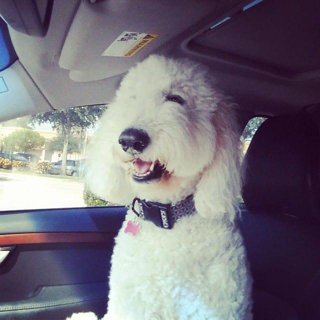Sadie in the car
