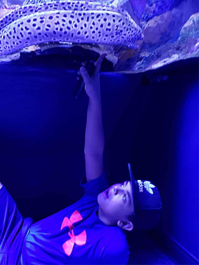 Ripley's Ripley's Aquarium Gatlinburg (1) Gatlinburg Moray Eel