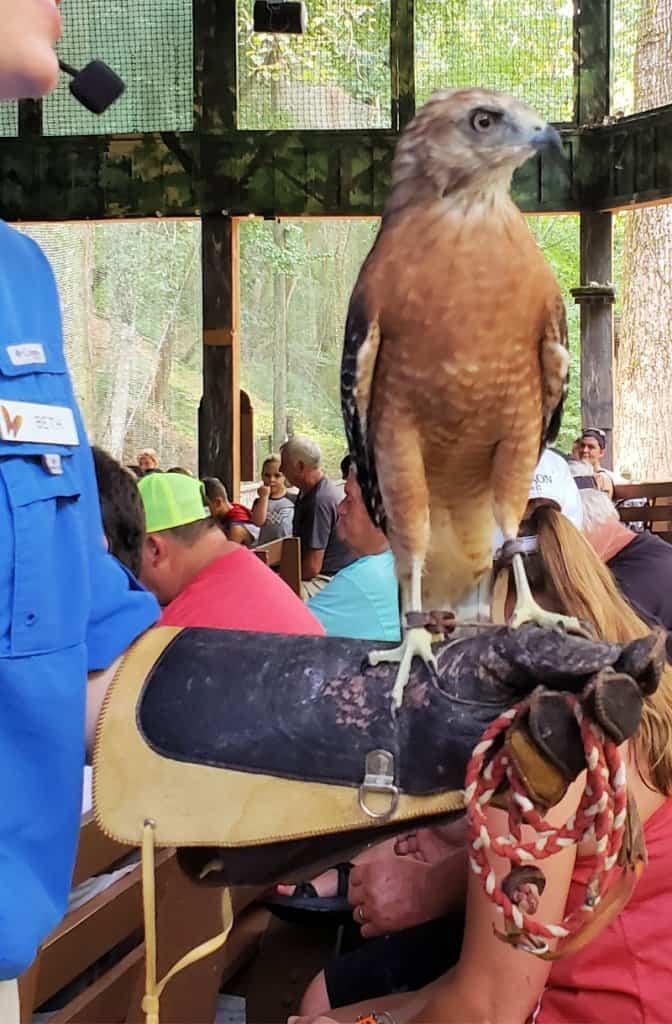 Dollywood Theme Park Bird