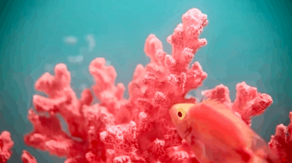 Living Coral: The 2019 Pantone Color of the Year