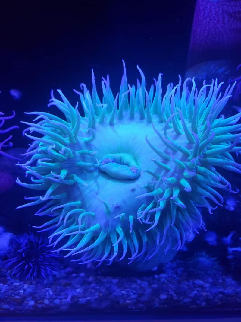 Frost Science Museum Aquarium