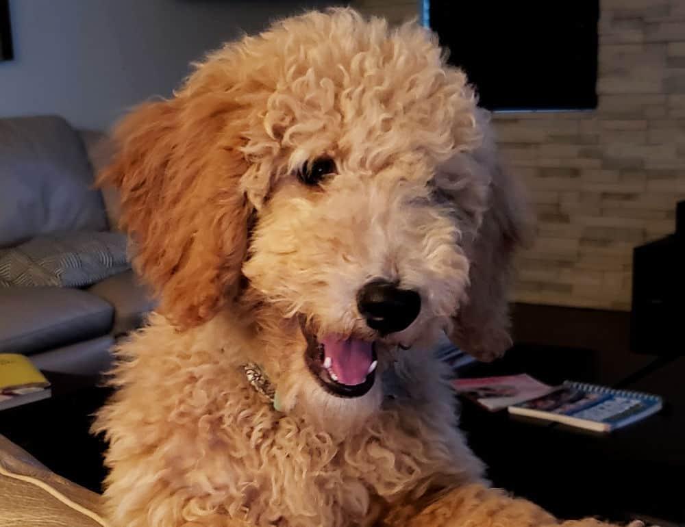 Best Dog Grooming Supplies