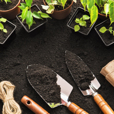 Transform Your Garden In Time For Spring