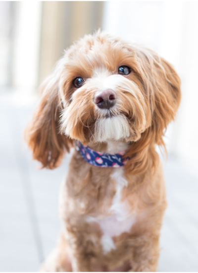4 Things To Know Before You Get A Family Pet