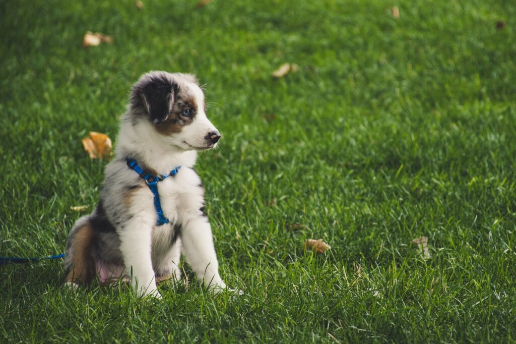 What Does It Take To Be A Brilliant Dog Owner?