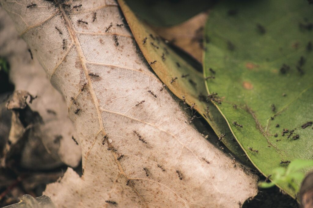 Top Tips to Keep Your Home Pest-Free