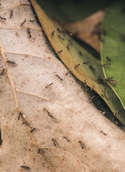Get the Bug Out of Here: Top Tips to Keep Your Home Pest-Free