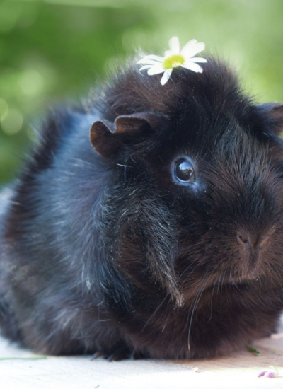 Three Tips For Looking After Small Indoor Pets