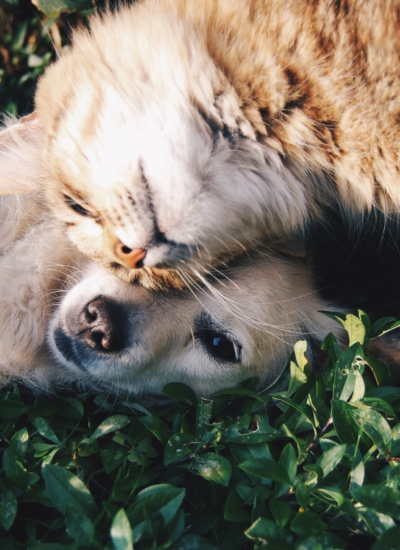 Tips for Apartment Hunting When You Have a Pet